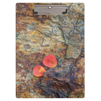 Autumn leaf on rock, California Clipboards