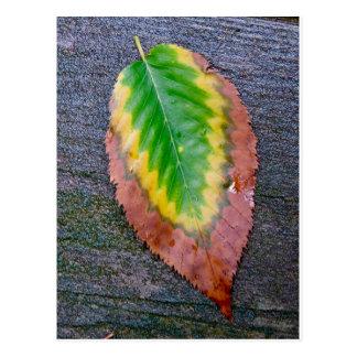 Autumn Leaf Photography Postcard