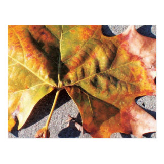 autumn leaf post cards