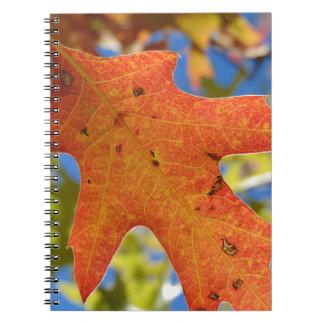 Autumn Leaf Up Close Notebook