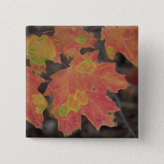 Autumn Leaves 2 Inch Square Button