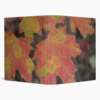 Autumn Leaves 3 Ring Binders
