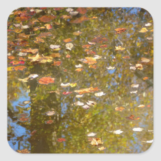 Autumn Leaves and Stream Reflection at Greenbelt Square Sticker