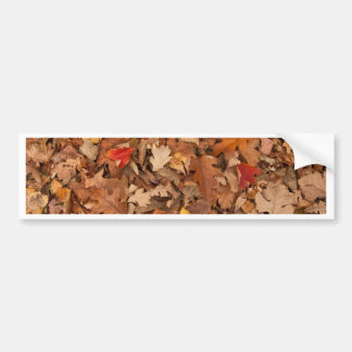 Autumn Leaves Bumper Sticker