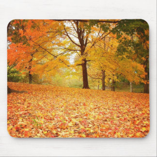 Autumn Leaves, Central Park, New York City Mouse Pad