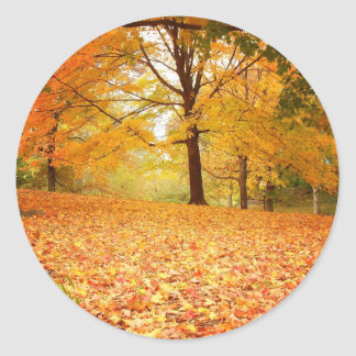 Autumn Leaves, Central Park, New York City Round Sticker