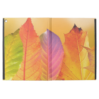 Autumn Leaves Colorful Modern Fine Art Photography