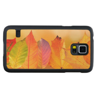 Autumn Leaves Colorful Modern Fine Art Photography Maple Galaxy S5 Case