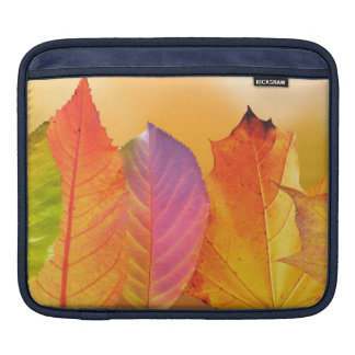 Autumn Leaves Colorful Modern Fine Art Photography Sleeves For iPads