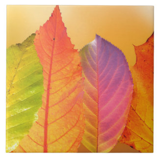 Autumn Leaves Colorful Modern Fine Art Photography Tile
