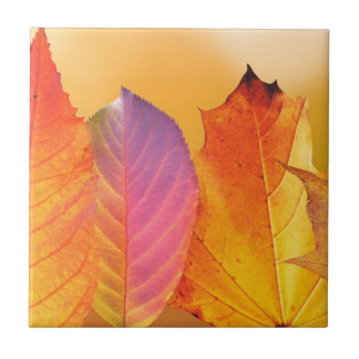 Autumn Leaves Colorful Modern Fine Art Photography Tiles