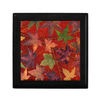 Autumn Leaves Fall Season Tree Leaf Colorful Jewelry Boxes