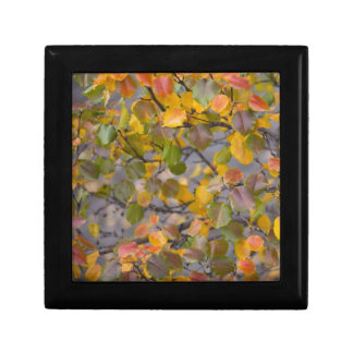 Autumn leaves gift box