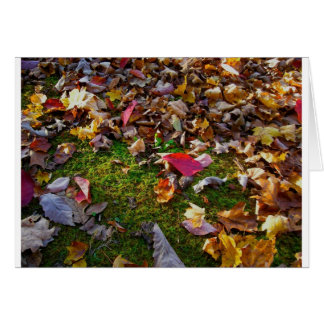 Autumn Leaves Greetings Card
