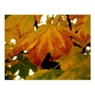 Autumn Leaves II Postcard