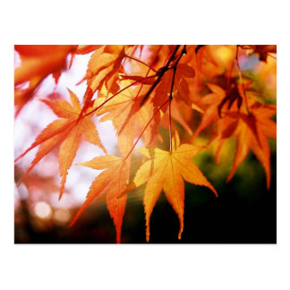 Autumn Leaves in a Japanese Wood Postcard