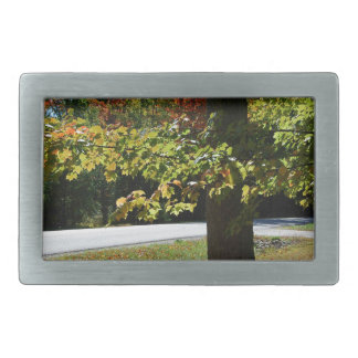 Autumn Leaves in Maine Belt Buckles