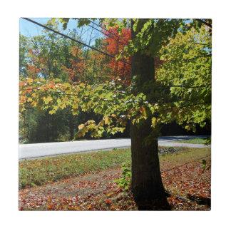 Autumn Leaves in Maine Ceramic Tiles