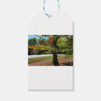Autumn Leaves in Maine Pack Of Gift Tags