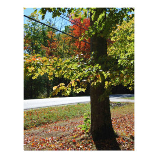 Autumn Leaves in Maine Personalized Letterhead