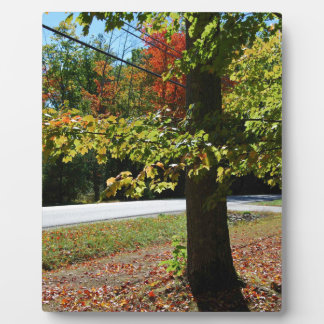 Autumn Leaves in Maine Plaque