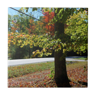 Autumn Leaves in Maine Tile