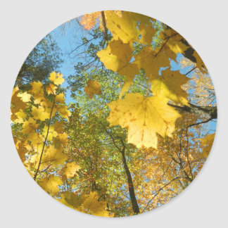 Autumn Leaves in The Sky Classic Round Sticker