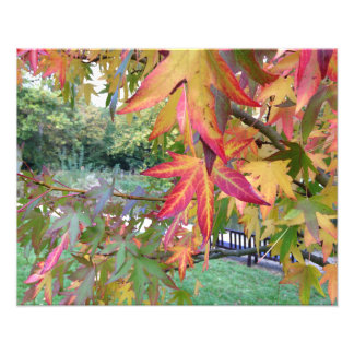Autumn Leaves Photo Print