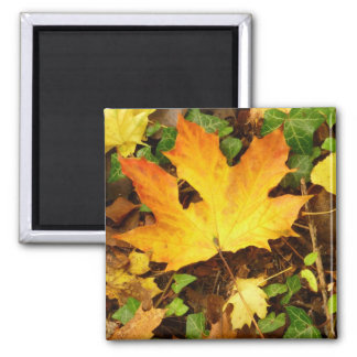 Autumn Maple Leaf Magnet
