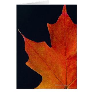 Autumn Maple leaf on black background Card