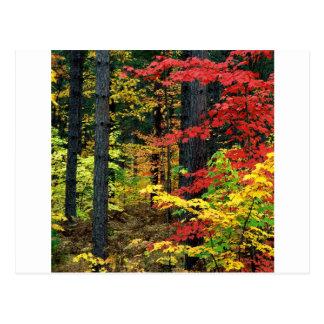 Autumn Michigan Postcard