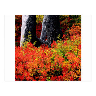 Autumn Mount Baker Postcard