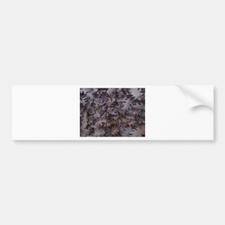 Autumn Oak Leaves Bumper Sticker