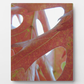 Autumn Oak Leaves Plaque
