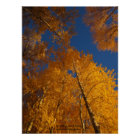 Autumn on Ojito Creek Poster