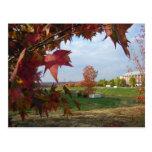 Autumn Over the Convo Postcard