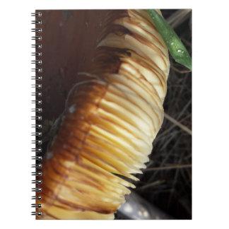 Autumn - Paddenstoel details note book