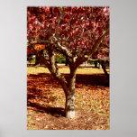 Autumn Palette Posters