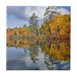Autumn pond reflections, Maine Tile