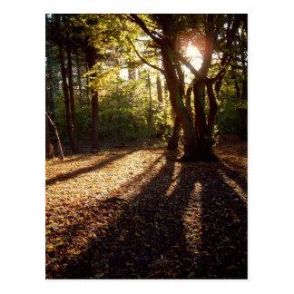 Autumn | postcard