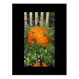Autumn Pumpkin garden Post Card