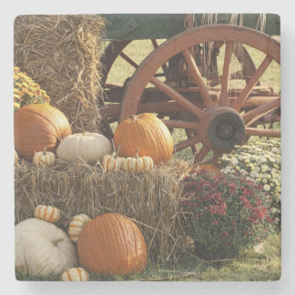 Autumn Pumpkins And Mum Display Stone Coaster