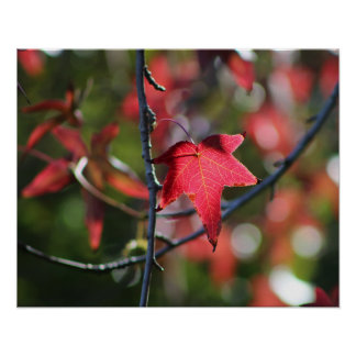 Autumn red leaf poster