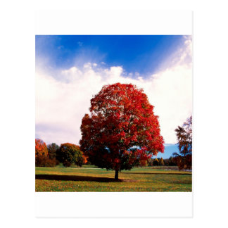 Autumn Red Maple Tree Forest Clermont Kentucky Postcard