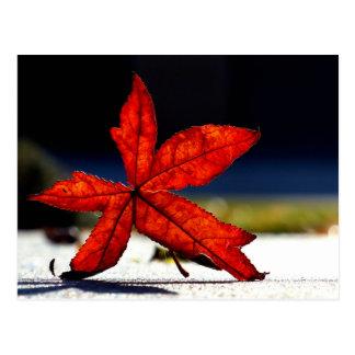 Autumn Red Orange Maple Leaf Postcard