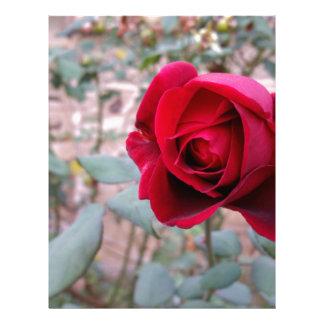 Autumn red rose custom letterhead