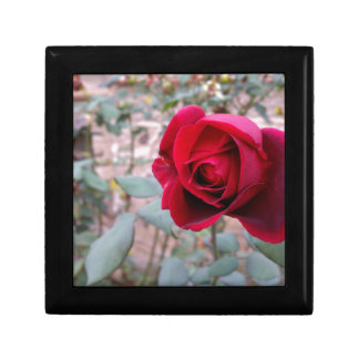Autumn red rose gift box