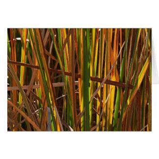 Autumn Reeds Number 1 Greeting Card