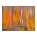 Autumn Reflections on Beaver Pond | Winthrop, WA Postcard