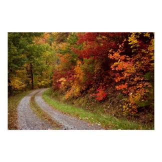 Autumn  Road  Print